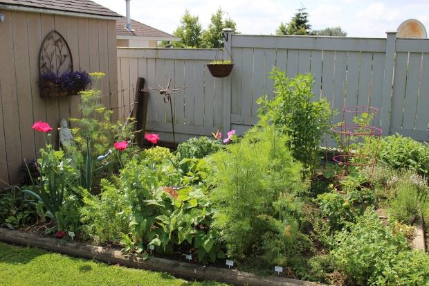 My Suburban Garden
