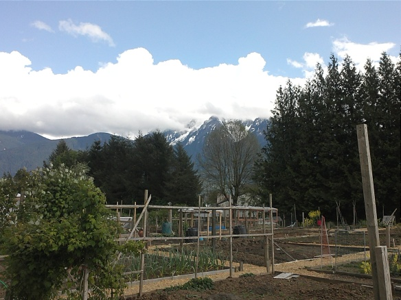 View surrounding my community garden plot